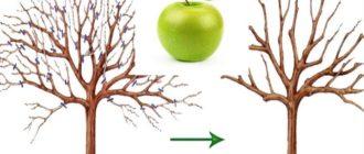 Маленький ежегодный прирост или его отсутствие, тоже относится к фактору старения