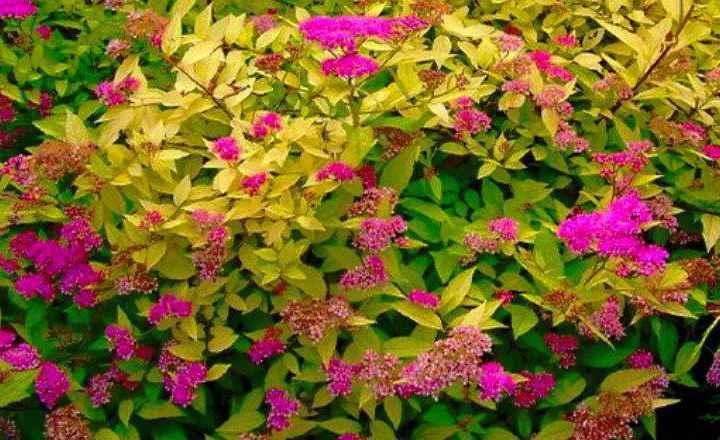 Осень – красные, оранжевые, бордовые листики