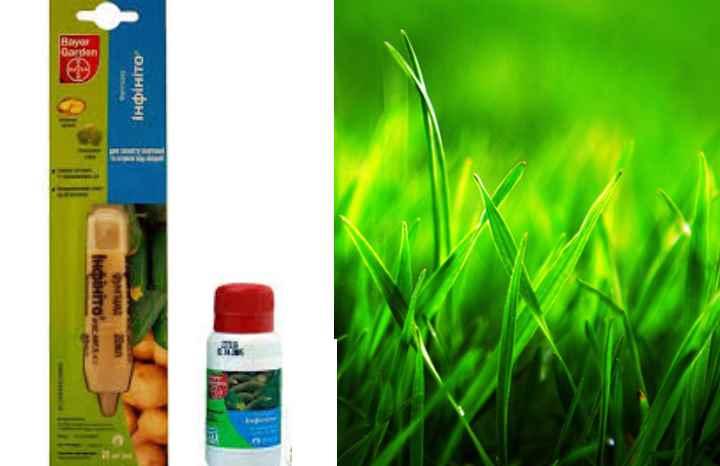 Препарат способен излечить огурцы и капусту от мучнистой росы и переноспороза.