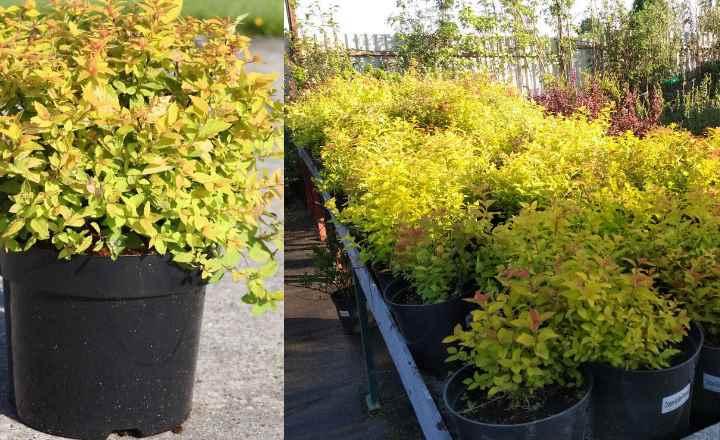 Весна – ярко – желтые листики