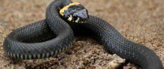 Страх змей — это высокие температуры